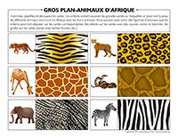 Gros plan animaux d'Afrique