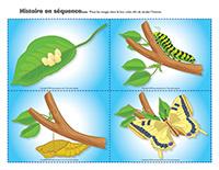 Histoire en séquence-Papillon