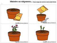 Histoire en séquence-Plante