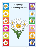 Identification groupe-Les marguerites