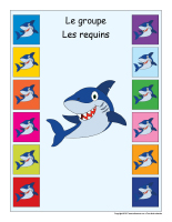 Identification groupe-Les requins