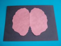 Imagerie de cerveau colorée-4