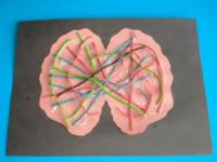 Imagerie de cerveau colorée-7