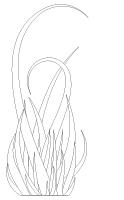 Images à colorier-L'herbe