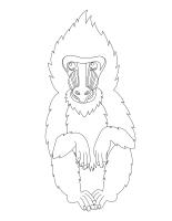Images à colorier-Le safari