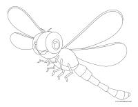 Images à colorier-Les libellules