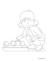 Images à colorier-Les semences