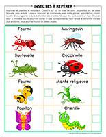 Insectes à repérer