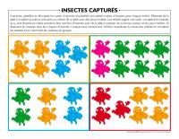 Insectes capturés-2