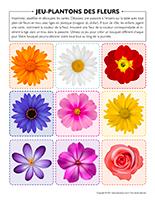 Jeu-Plantons des fleurs