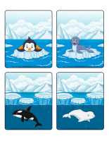 Jeu d'images-Animaux polaires-2