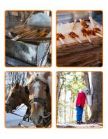 Jeu d'images-Cabane à sucre-2