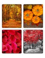 Jeu d'images-Couleurs d'automne-1