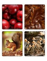 Jeu d'images-Couleurs d'automne-2