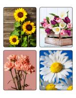 Jeu d'images-Fleurs-activité
