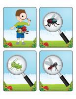 Jeu d'images-Insectes-2