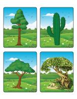 Jeu d'images-Les arbres-1