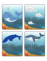 Jeu d'images-Les baleines