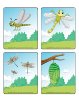 Jeu d'images-Les libellules-2