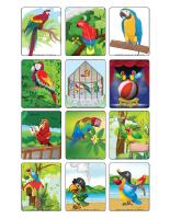Jeu d'images-Les perroquets