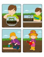 Jeu d'images-Les semences-2