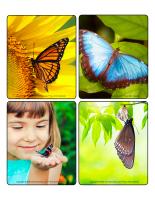 Jeu d'images-Papillons-1