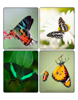 Jeu d'images-Papillons-2