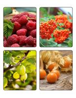 Jeu d'images-Petits fruits-2
