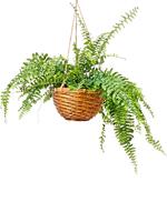 Les bienfaits des plantes dans vos locaux-1