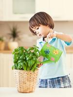 Les bienfaits des plantes dans vos locaux-2