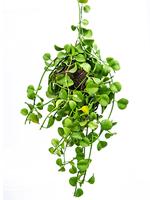 Les bienfaits des plantes dans vos locaux-3
