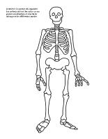 Mobile - squelette