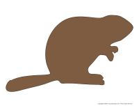 Modèles-Les castors