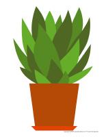 Modèles de plantes