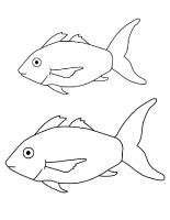 Modèles de poissons variés
