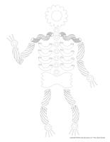 Modèles-squelettes à reproduire