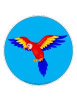 Mon chemin de perroquets