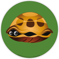 Mon chemin de tortues