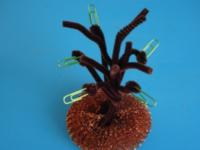 Petit arbre généalogique-6