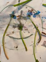 Petit bricolage simple : des fleurs au soleil Petit-3
