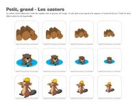 Petit-grand-Les castors