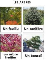 Poni découvre et présente - Les arbres