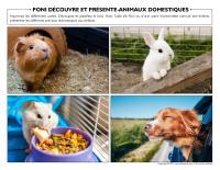 Poni découvre et présente-Animaux domestiques