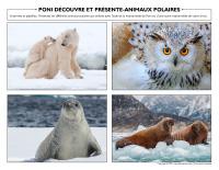 Poni découvre et présente-Animaux polaires-1