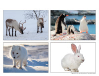 Poni découvre et présente-Animaux polaires-2