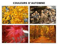 Poni découvre et présente-Couleurs d'automne
