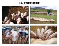 Poni découvre et présente-La porcherie