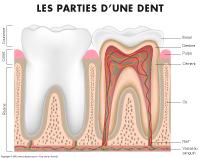 Poni découvre et présente-La santé dentaire