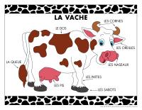 Poni découvre et présente-La vache