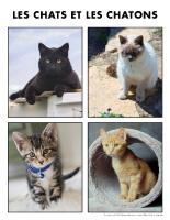 Poni découvre et présente-Les chats et les chatons